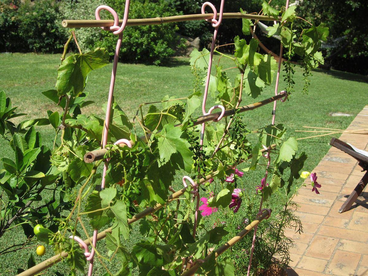 Sostegni Per Pomodori In Vaso klema - il design a sostegno delle piante - shop - viterbo